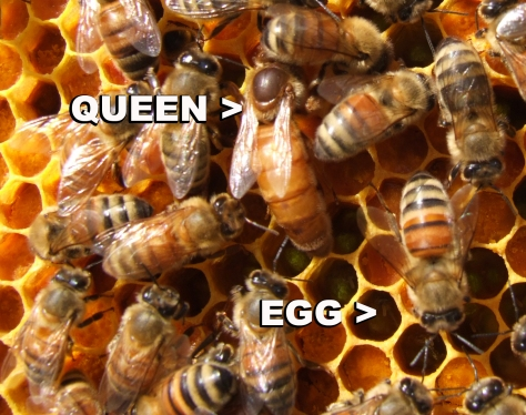 queen pic labeled